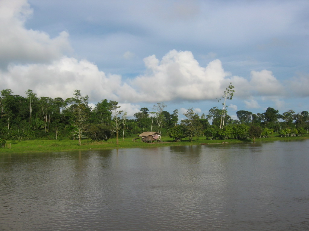 Farms along the Amazon riverbank are clearing the forest for crops and grazing.