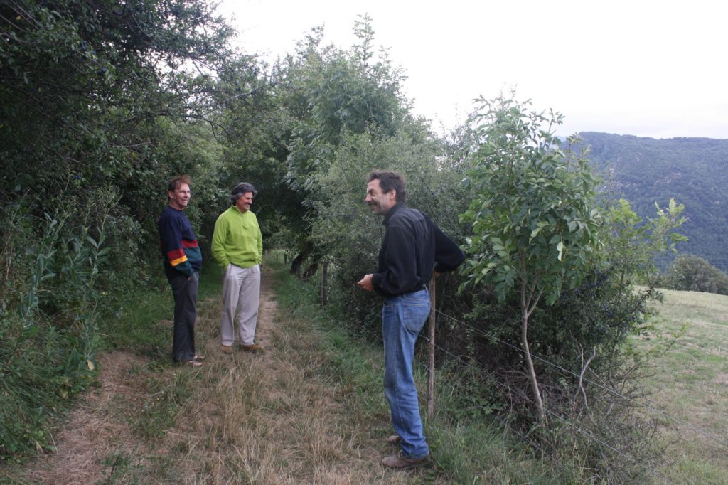 Ancient hedgerow on Andy Darlington's permaculture farm in the Pyrennes, Sth France