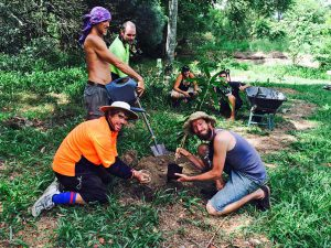 Volunteers planting a Mango tree in Mollison Memorial Food Forest