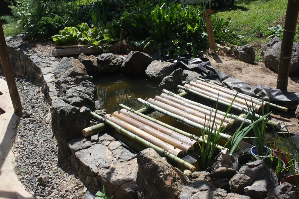 Bamboo bridge over garden pond