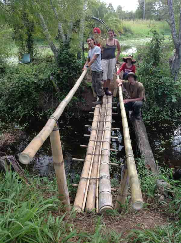 Bamboo bridge made with D. asper