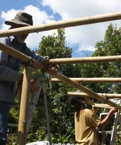 Building a bamboo pergola using B. oldhamii