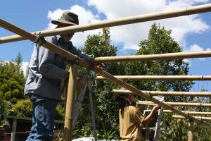 Bamboo in Permaculture with Robyn Francis – Permaculture