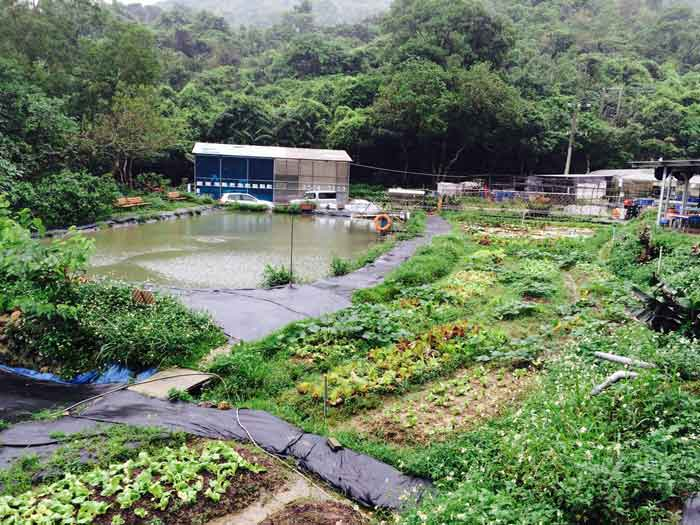 E-farm aquaculture ponds surrounded by organic veg gardens