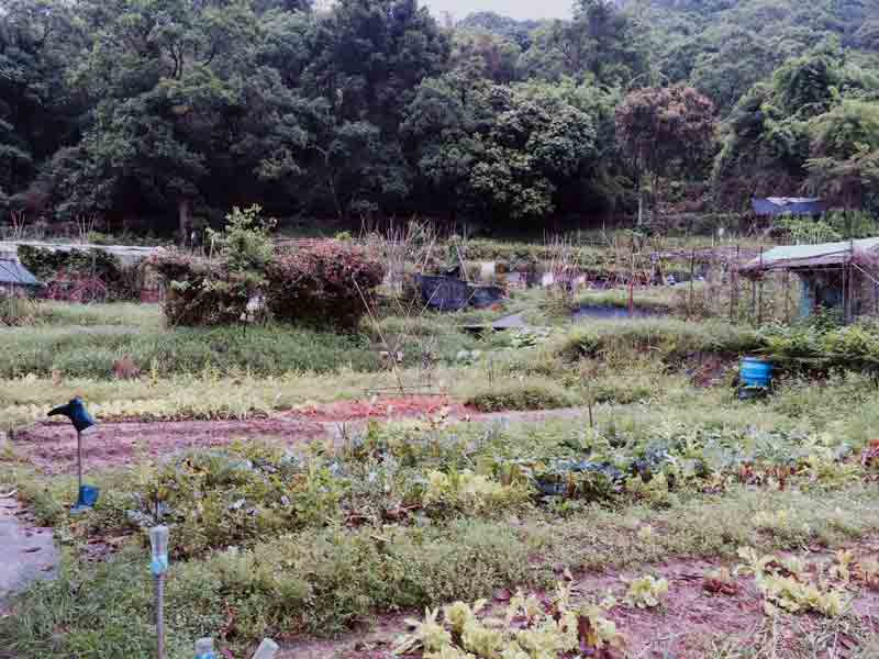 Plots for weekend farmers surrounded by forested hills