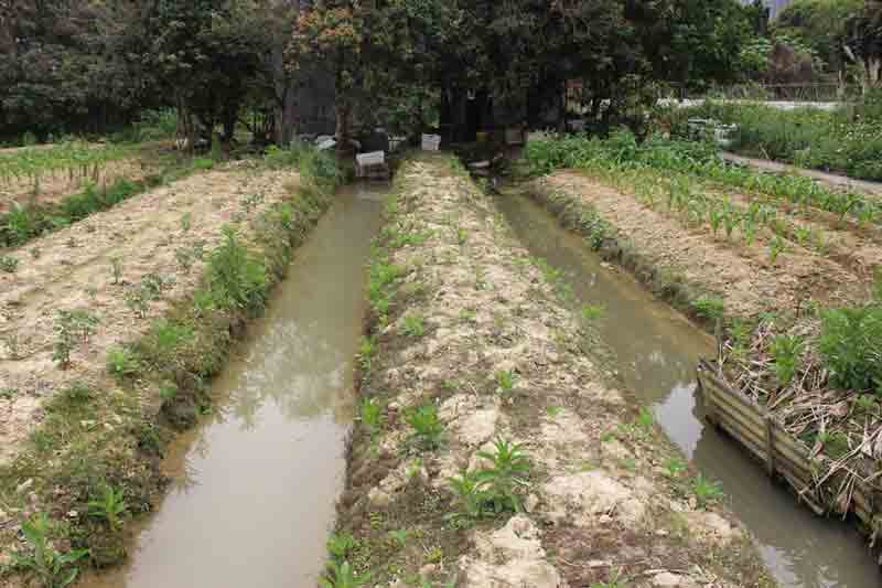 Traditional wetland raised beds and waterways