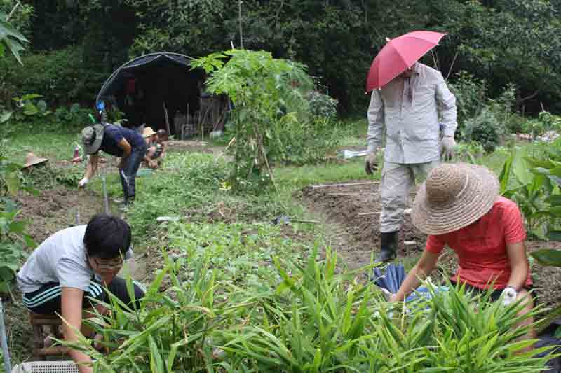 Weekend farmers tending plots at O-Farm