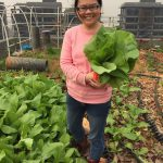 Kiki harvests fresh greens from the roof top for lunch for the Taihua staff