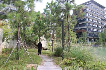 The landscape establishing at Wutong Island