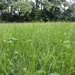 a meadow bursting with life and biodiversity