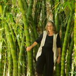 Robyn Francis in one of her many bamboo clumps at Djanbung Gardens