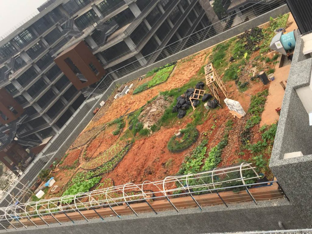 Permaculture design in early stage of implementation on the  Taihua office block building