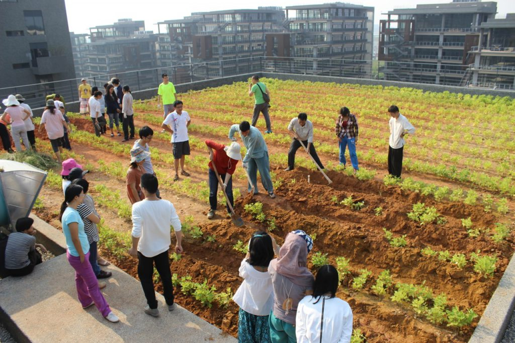 The rooftop Oct 2014 with soybean green manure crop