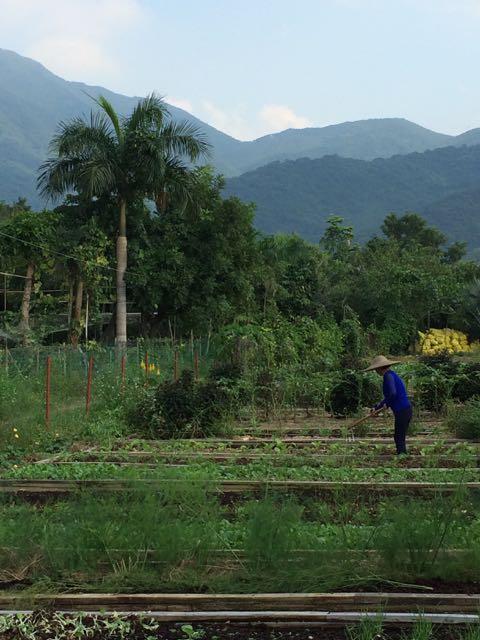 Garden plots at Wutong Mountain organic farm