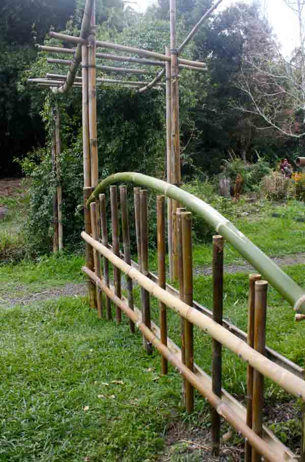 Bamboo arbour and fence using B. odhamii and B. tulda