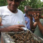 Villager harvesting honey from an Amazonian stingless bee hive